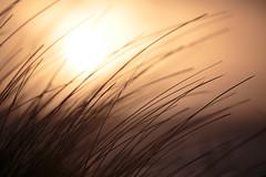 Sunset (robért0) Tags: sunset sun sunshine yellow denmark northsee 5dmark3