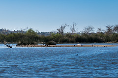 RanchoSanJoaquinWildlife-6 (rskim119) Tags: ca lake nature birds animal island pond nikon san outdoor wildlife joaquin marsh tamron sanctuary irvine rancho 70300 irwd d3300