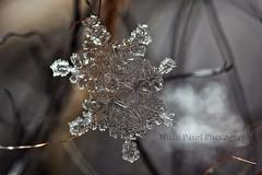 IMG_8496 (nitinpatel2) Tags: snowflakes patel nitin