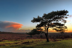 NewForest-Bratley-View-1.jpg (hampshireview) Tags: sunset sky grass clouds forest canon nationalpark hampshire orangesky sunburst newforest 6d bratleyview
