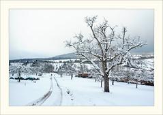 DSCF2982 (Frank Dpunkt) Tags: winter fujifilm murgtal sigma2418 s5pro