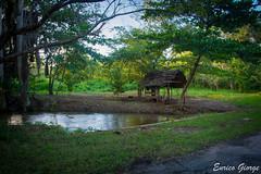 DSC_0055 (Promao80) Tags: lago tramonto cuba moron cavallo viaggio vacanza calesse