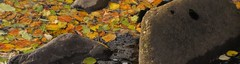 Drying Out (Alexander Michael Crow) Tags: autumn color fall water pool leaves rock stone river scotland leaf highlands rocks colours stones riverbed beech caithness lapping strath tidemark dunbeath neilgunn dunbeathstrath highlandrivercountry