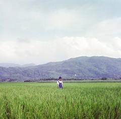 (wsifrancis) Tags: summer 120 6x6 tlr film mediumformat taiwan taipei    yashica yashicamat124g 2015  fujicolorpro400h twinlensreflect