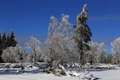 Winter Wonderland (EXPLORED 2016/02/08) (winkler.roger) Tags: trees winter snow germany landscape blackforest freudenstadt kniebis