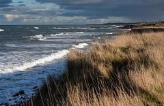 Fife coastal path north of Kingsbarns, looking south (EWin1) Tags: scotland fife kingsbarns fifecoastalwalk