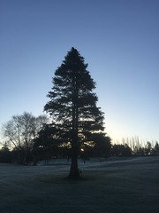 Frosty February Morning (firehouse.ie) Tags: county trees ireland winter irish cold west ice nature weather landscape countryside frost clare freeze western february icey 2016