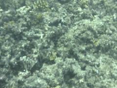 AGQ-20140423-0010 (AGQue) Tags: travel vacation fiji telephone cellphone april fj oceania 2014 underwaterphotography wetseason fji westerndivision iphoneography appleiphone4s gmt1200fijiislandsstandardtimezone