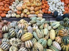 abundant melons (Mark Nazimova) Tags: nyc newyorkcity newyork square farmersmarket union pumpkins melons unionsquare cornucopia unionsquaregreenmarket unionsquarefarmersmarket