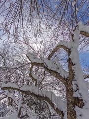 DSC01641-2 (johnjmurphyiii) Tags: winter usa snow yard connecticut shelly cromwell originaljpeg johnjmurphyiii 06416 sonycybershotdsch90