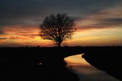 La grande quercia (bellimarco) Tags: sunset landscape