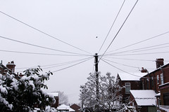 IMG_9843 (zafiraahmed) Tags: uk trees houses winter plants white snow streets cold cars ice nature leaves architecture buildings grunge snowstorm minimal pale snowdrops minimalism minimalistic zafiraahmed