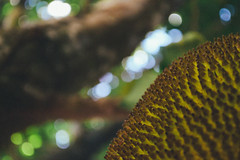 Jackfruit (G. Rangel) Tags: green nature beautiful delicious jackfruit