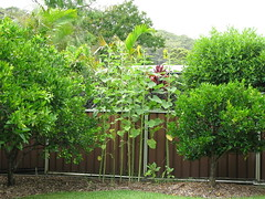 Garden in January