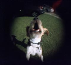 (iugmoura) Tags: brazil dog film praia beach beagle brasil analog holga xpro cross kodak porto crossprocessing processing doggy filme alegre expired ektachrome 120mm kodakektachromee100g e100g 120gn tramandaí vencido holga120gn portoalege