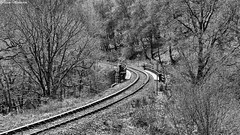 West Highland Line at Inveruglas (AdamMatheson) Tags: bridge blackandwhite bw monochrome train landscape lumix mono scotland blackwhite scenery scottish railway scene panasonic loch railwayline lochlomond trainline westhighlandline lochlomondnationalpark scottishlandscape inveruglas fz150 dmcfz150 adammatheson panasoniclumixfz150 lumixfz150 helensburghphotographer helensburghphotography adammathesonphotography