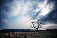 MIKE_0557-Kansas-I-35 (Michael William Thomas) Tags: travel light sky tree field clouds america photoshop landscape photography landscapes photo photographer american kansas treebark interstate mikethomas michaelthomas mtphoto cmndrfoggy michaelwthomas