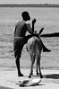 Donkey (Oliver Stone Images) Tags: silhouette tanzania kenya donkeys muslim islam profile culture donkey service lamu silhouetted sanctuary cultura poise burden islamic swahili kenyan tanzanian musulmán