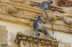 Sri Lanka (Marta Zanobi) Tags: srilanka ritratti animali polonnaruwa rovinesecondacittreale