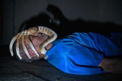 Alien Facehugger (D-W-J-S) Tags: shadow film face monster chest alien infected parasite facehugger hugger chestburster burster