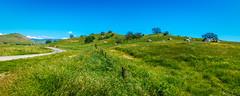 Therapy (Calpastor) Tags: california water grass rain san joaquin exeter valley drought visalia farmersville tulare yokohl