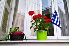 Athenian Window Display (Dave G Kelly) Tags: flowers window greek flag athens greece colourful greekflag