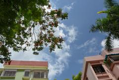 Blue Sky (Nitya...) Tags: blue sky house flower building tree brick green concrete nikon outdoor neighbourhood