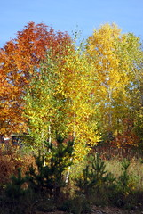 DSC_6059 (Rustam Bikbov) Tags: autumn september 2012    sverdlovskoblast