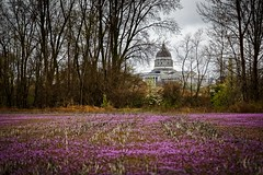 Henbit State Capitol II (Notley) Tags: bridge sky architecture clouds rural march spring weeds weed dof purple depthoffield capitol missouri callawaycounty statecapitol bucolic capitolbuilding purpleflowers jeffersoncitymissouri henbit 2016 riverbottoms 10thavenue notley rurallandscape ruralphotography missouririverbottoms purpleblooms notleyhawkins callawaycountymissouri missouriphotography httpwwwnotleyhawkinscom notleyhawkinsphotography henbitblooms cedarcitymissouri