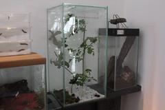 IMG_0004 (J_turner6) Tags: up set garden tank tiger moth caja caterpillar breeding info care vivarium rearing arctia