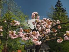 mozirski-gaj_35 (carlo) Tags: flowers olympus slovenia slovenija fiore botanicalgarden omd em1 ortobotanico giardinobotanico mozirje mozirskigaj