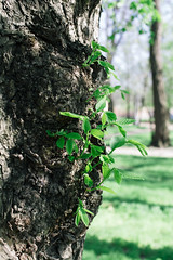 Nature Nature (Frostroomhead) Tags: plants tree art nature leaves nikon f14 grow sigma bark 30mm d5200