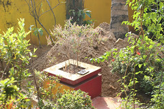 Sand and tulasi (Nagarjun) Tags: beauty spring kerala amma aluva samrajyalakshmi
