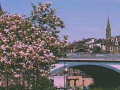 Rose-tinted cityscape (tobias.berchtold) Tags: bridge pink sky flower film architecture analog vintage bristol spring retro architectureporn vsco vcsocam