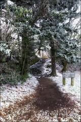 Follow Me... (FiddleFlix) Tags: morning usa snow mountains northcarolina trail blueridgeparkway mtpisgah trailhead mountainstoseatrail buckspringsoverlook