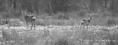 Staring (outdoorjive@btinternet.com) Tags: desktop uk animals other norfolk places flikr eastanglia