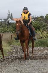 IMG_EOS 7D Mark II201604039704 (David F-I) Tags: horse equestrian horseback horseriding trailriding trailride ctr tehapua watrc wellingtonareatrailridingclub competitivetrailriding sporthorse equestriansport competitivetrailride april2016 tehapua2016 tehapuaapril2016 watrctehapuaapril2016