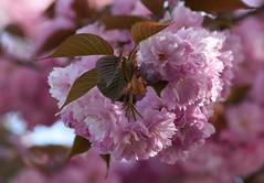 Spring (careth@2012) Tags: nature spring bokeh