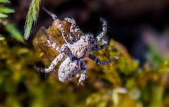 Spider (vernonbone) Tags: park lens outside nikon sigma morningside highlandcreek d3200 april2016