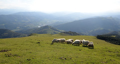Eretza (Paulo Etxeberria) Tags: primavera spring sheep printemps ovejas udaberria brebis ardiak eretza