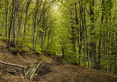 In the spring forest (erfey07) Tags: light brown mountain green water spring nikon walk perspective april depth beech pathway d3200