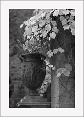Blagdon Urn (Ali's view) Tags: autumn urn garden ivy infrared
