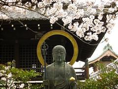 Sakura in Kyoto (Northern_Night_Sky) Tags: travel japan canon kyoto religion   cherryblossom  sakura kiyomizudera awalkinkyoto
