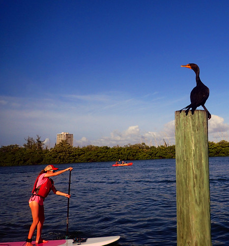 12_29_15  pm paddleboard tour Sarasota FL 01