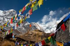 Man vs Mountains (Pooja Pant) Tags: nepal mountains beautiful trek abc annapurna annapurnabasecamp macchapuchre