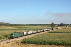 Fin de ao en la 800 (rubiogg4) Tags: tren astorga ponferrada 601 carbonero aboo comsa bitrac cemtor