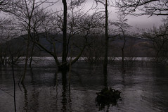 Loch Lomond (jamie reilly) Tags: tree water scotland flood highland loch highwater lochlomond hostal balmaha rowardennan