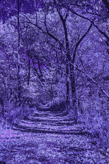 DSC_0001-EditFAA (john.cote58) Tags: blue autumn trees fall leaves ir outside outdoors design mood gloomy path interior surreal blues cover mind infrared melancholy purples altering creativeedit