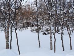 Well hidden (alpros) Tags: schnee white snow mountains sweden schweden skandinavien sverige scandinavia sn nordeuropa jmtland northerneurope bruksvallarna ramundberget svenskafjllen funsfjllen hrjedalenkommun
