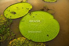 NO_Manaus0416 (Visit Brasil) Tags: travel brazil tourism horizontal brasil amazon rainforest vitriargia manaus norte amazonas detalhe ecoturismo externa semgente diurna riosolimes visitbrasil